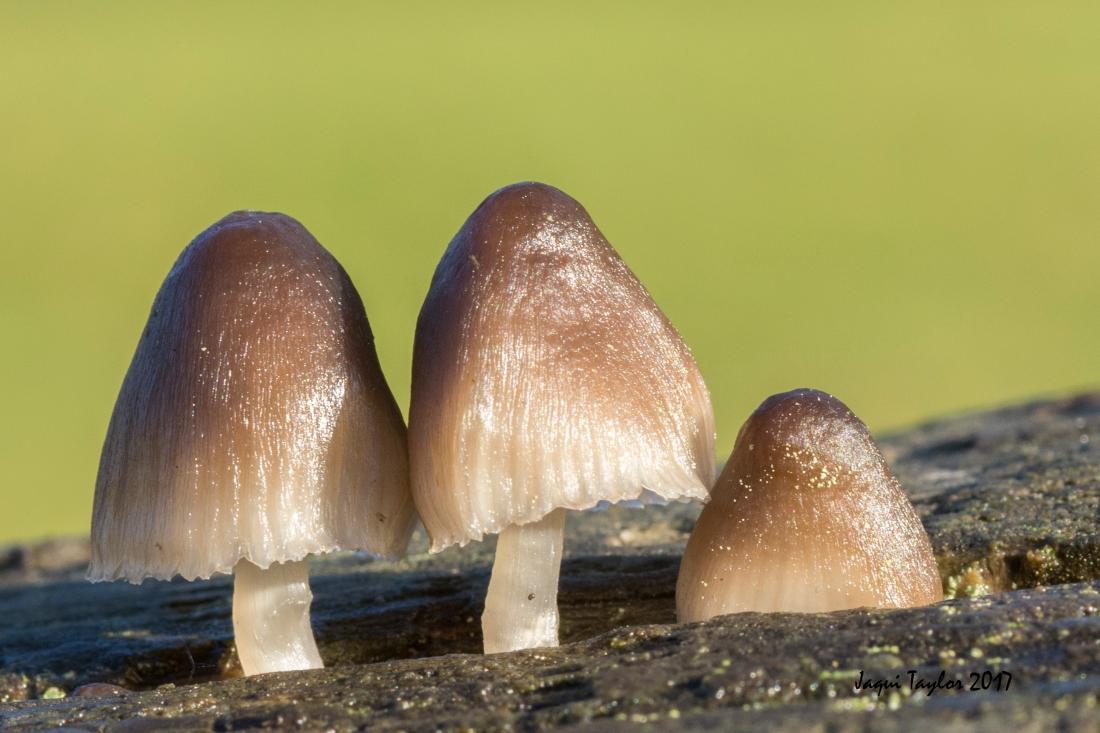 fungi6dreams